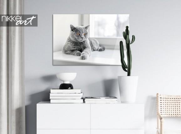 Foto Ihrer Katze auf Acrylglas