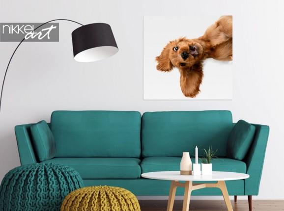 Foto Ihres Hundes auf Poster