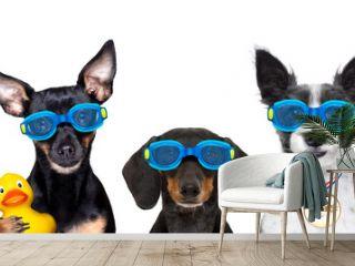 dog swim goggles in pool
