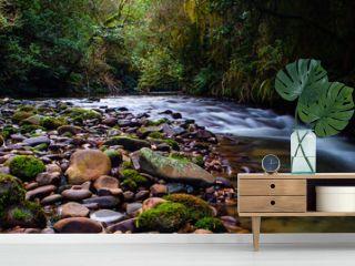 Rain forest steam