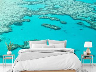 coral reef in the sea