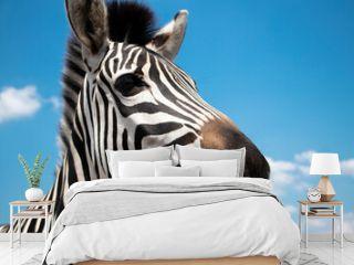selective focus. Nose, muzzle, close .Cape mountain zebra close-up against the sky. Equus zebra in natural habitat. National reserve of zebras Askania Nova. Zebra portrait cheerful. space for text.