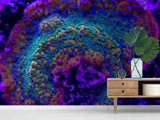 Multicolor Coral