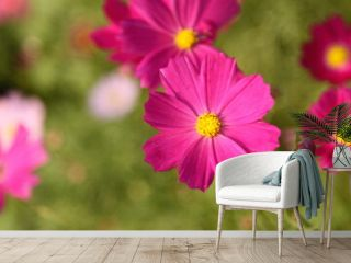 fresh, garden, flower, cosmos, nature, green, blossom, summer, pink, colorful, plant, beautiful, flora, landscape, purple, environment, blooming, outdoor, countryside, meadow, petal, bright, botany