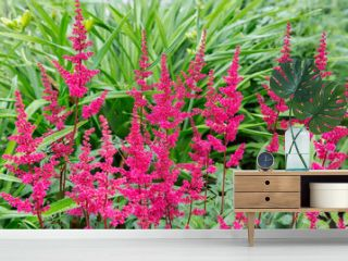 Red astilba. This is a plant that can be planted in the garden, on a flower bed. Very often, a flower becomes the highlight and center of landscape design. The flowers are small, bright red in color,