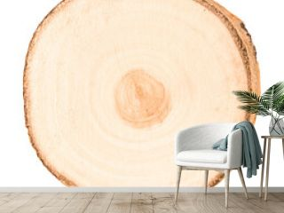 Cross section of tree trunk on white background