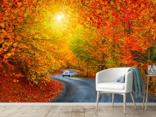 Car driving on the road in the forest in autumn season. Autumn colors bring the forest to life. Autumn landscape in the deep forest. Autumn view on a sunny day. Beautiful colors of jungle.