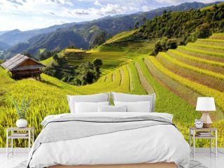 Terraced rice field in rice season in Sapa, Vietnam, soft focus