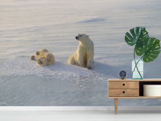 Polar bear with her cub on a frozen lake in the Canadian Arctic