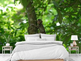 Bébé singe dans les arbres