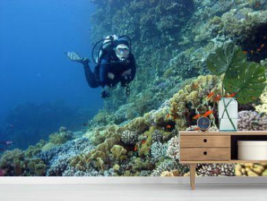scuba diver in the read sea