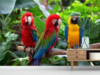 Parrots in South East Asia