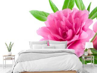 isolated pink azalea on white background