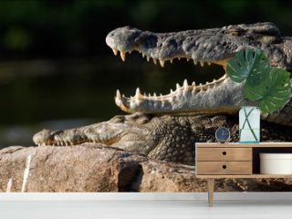 Mouth of a crocodile.