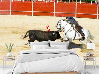 Bullfight on horseback. Typical Spanish bullfight.