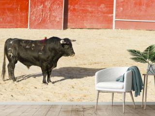 Spanish bull. Bullfight.