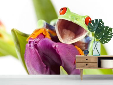 Red eyed tree frog sitting on flower