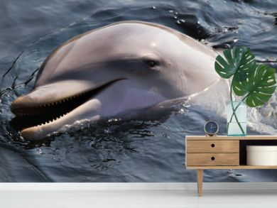Bottlenose dolphin or Tursiops truncatus