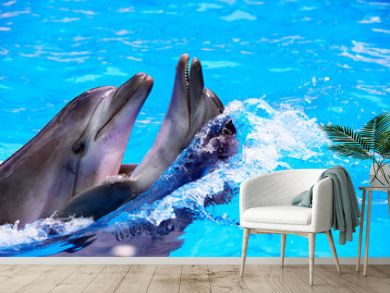 Couple of dolphin in blue water.