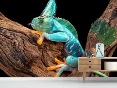 Part frog part chameleon