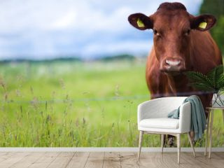 Cow standing in the field