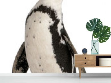 African Penguin, Spheniscus demersus, 10 years old,