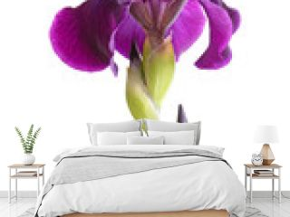 Stem with deep purple iris flower isolated on white