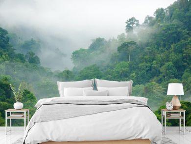 rainforest morning fog