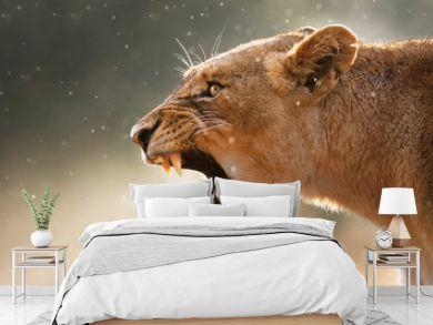 Lioness displaying dangerous teeth
