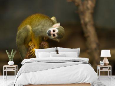 Squirrel monkey in a branch
