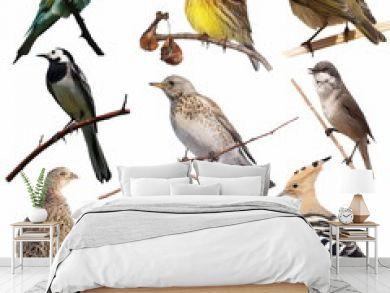 Set birds isolated on white background, texture