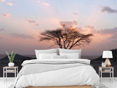 Tree in the Sahara desert, sunset