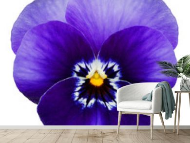 Blue pansy isolated on white with clipping path