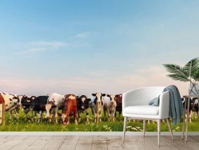 Curious Dutch milk cows in a row