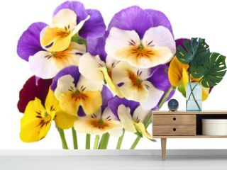 pansy flowers on white