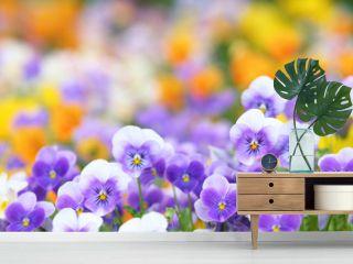 紫色のビオラ
