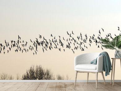 Flock of birds migrating south