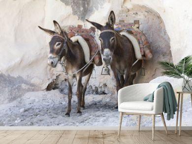 Greek donkeys