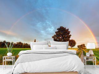 Rainbow over field road