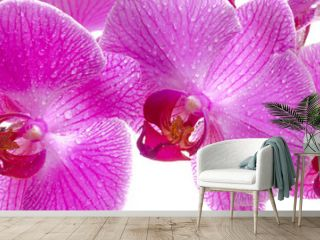 orchid in panorama