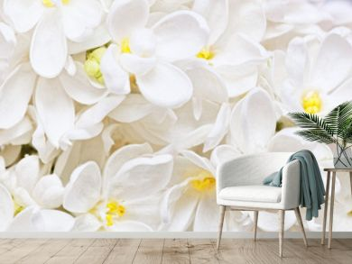 Beautiful  white  Lilac. Macro.