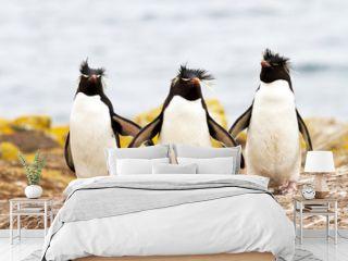 Rockhopper Penguins walking uphill