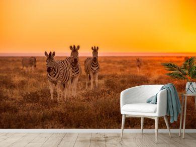 A herd of Zebra grazing at sunrise in Etosha, Namibia