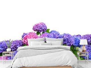 hydrangea on white background
