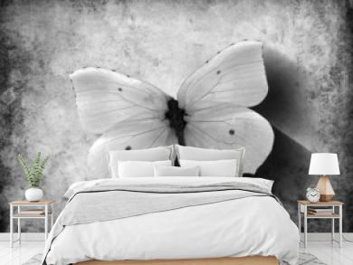 Grunge Butterfly with Shadow