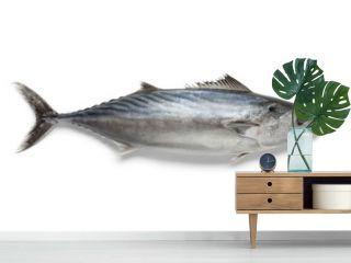 Singlre fresh bonito fish