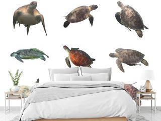 Sea turtles collection (green and hawksbill)  isolated on white