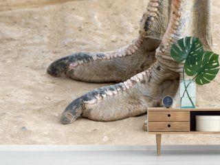 The foot of an Ostrich bird. South Africa
