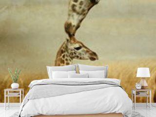 Mother-giraffe and baby-giraffe