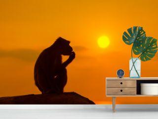 Silhouette of a monkey at beautiful sunset